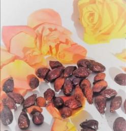 Rosenship dry fruits